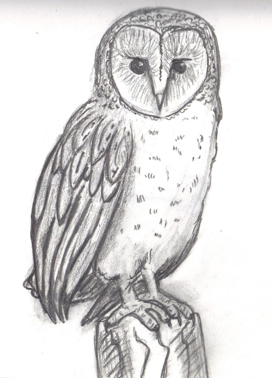 Barn Owl Sketch By ToPendi On DeviantArt