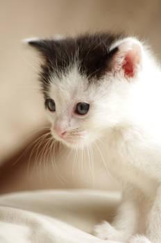 Babycat 8