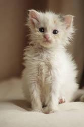 Babycat 5