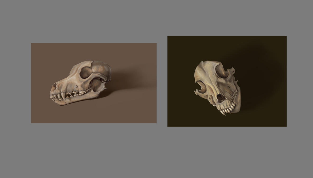 Skull studies from life by Zorrentos