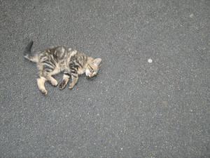 A so cute kittie