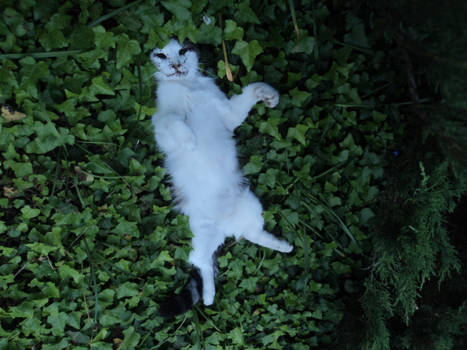 Dead cat with the face devoured by the ants 3/3