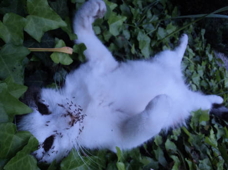 Dead cat with the face devoured by the ants 2/3