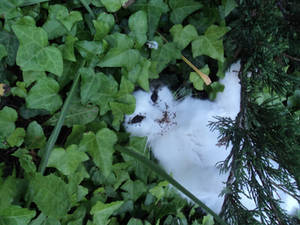 Dead cat with the face devoured by the ants 1/3