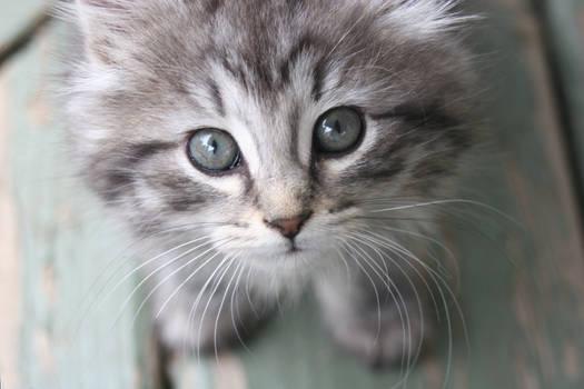 Curiousity Captured the Cat