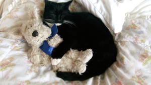 Happy Kitten by Sophminx