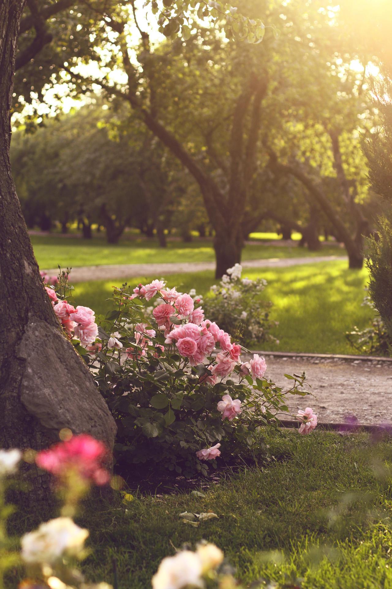 rosen garden by SelenaAdorian