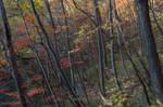 Autumn Mosaic III