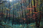 Autumn Mosaic VII