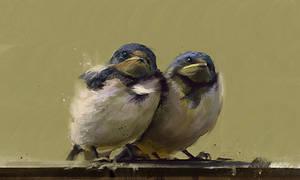 20100623-birds