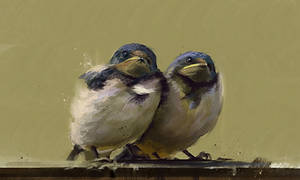 20100623-birds by jamlee1020