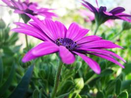 purpleee's coolness. by aliemraharp