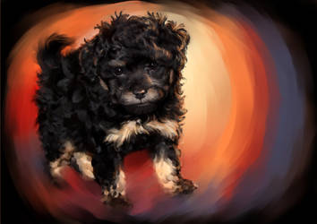 Phantom Poodle Puppy  - Teddy by Sharpk