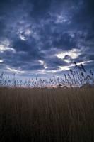 skyful of lead by adamlack