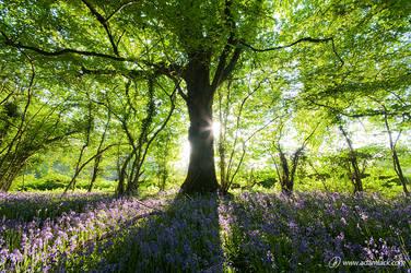 Springtime by adamlack