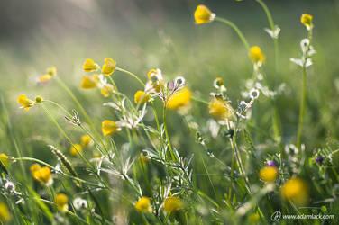 Les Fleurs by adamlack