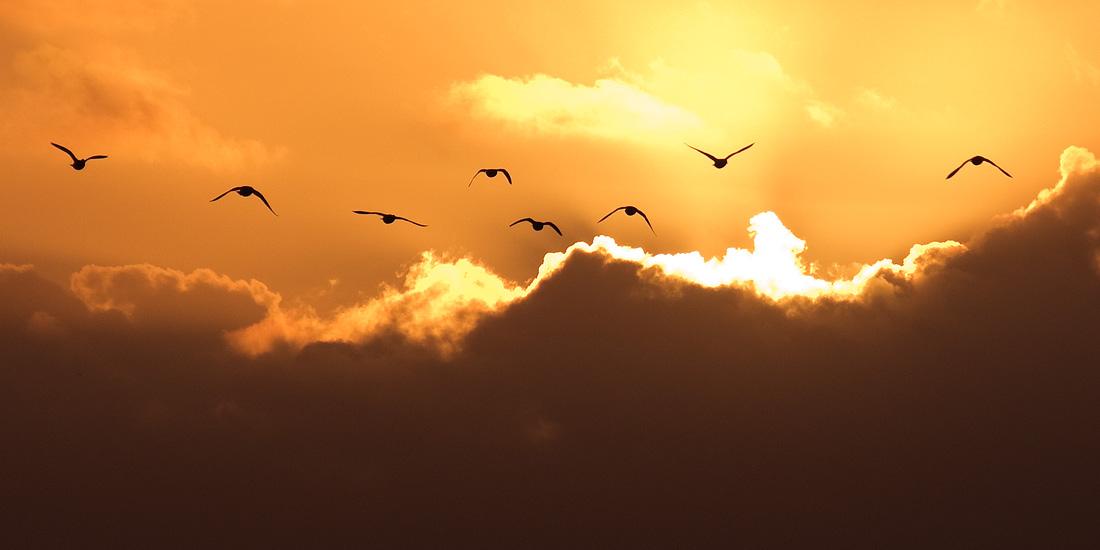 Fly away by adamlack