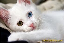 Casper My Cat by RainStep06418