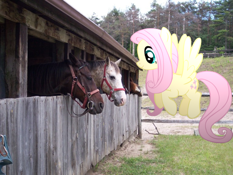 fluttershy meets real ponies irl by pangbot on deviantart