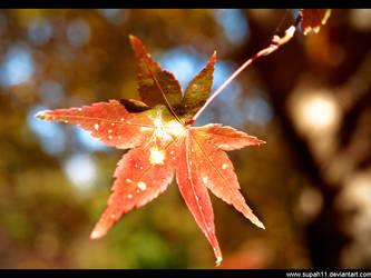That single leaf by supah11
