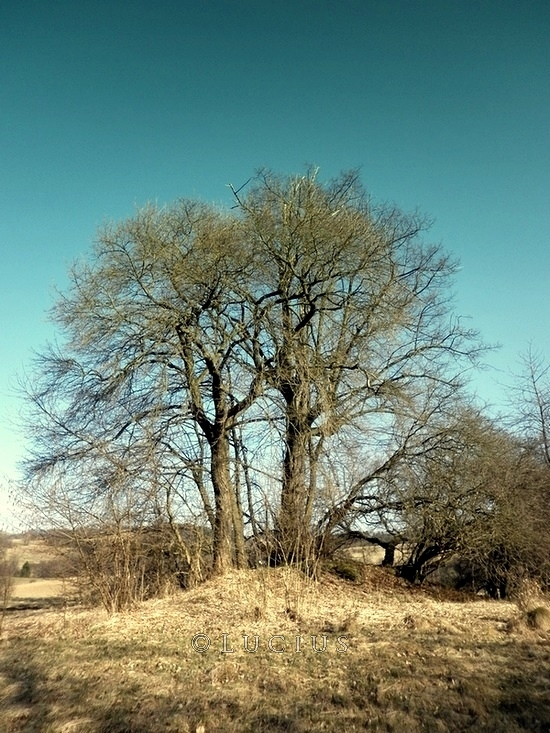 Bare tree by LuciusThePope