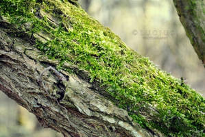 Moss on a trunk by LuciusThePope