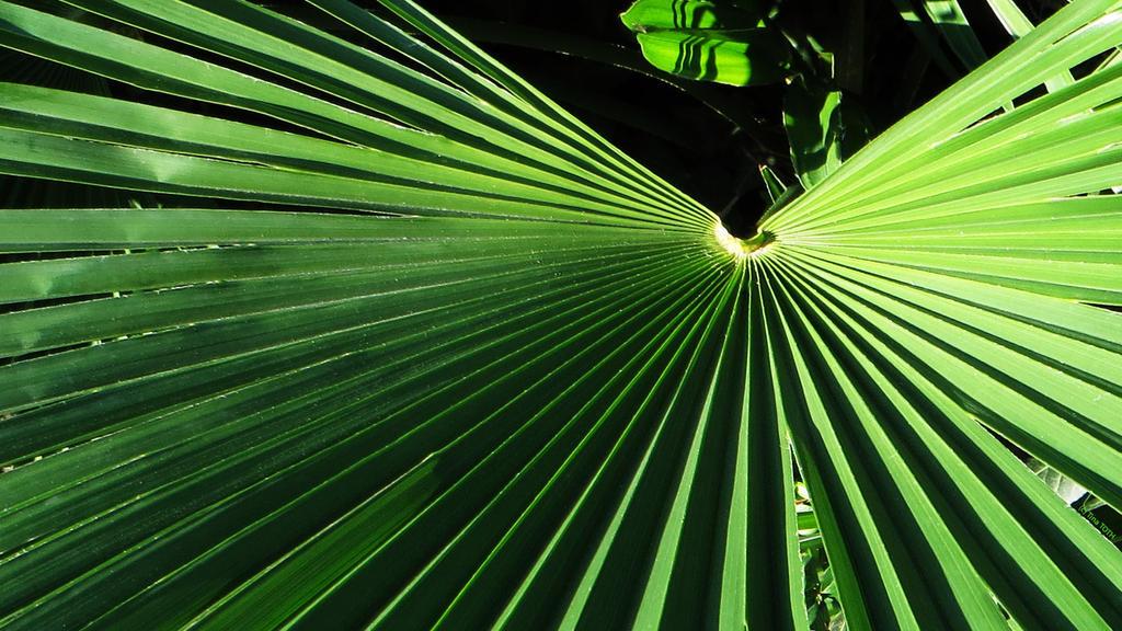 green breath by Engelsblut24
