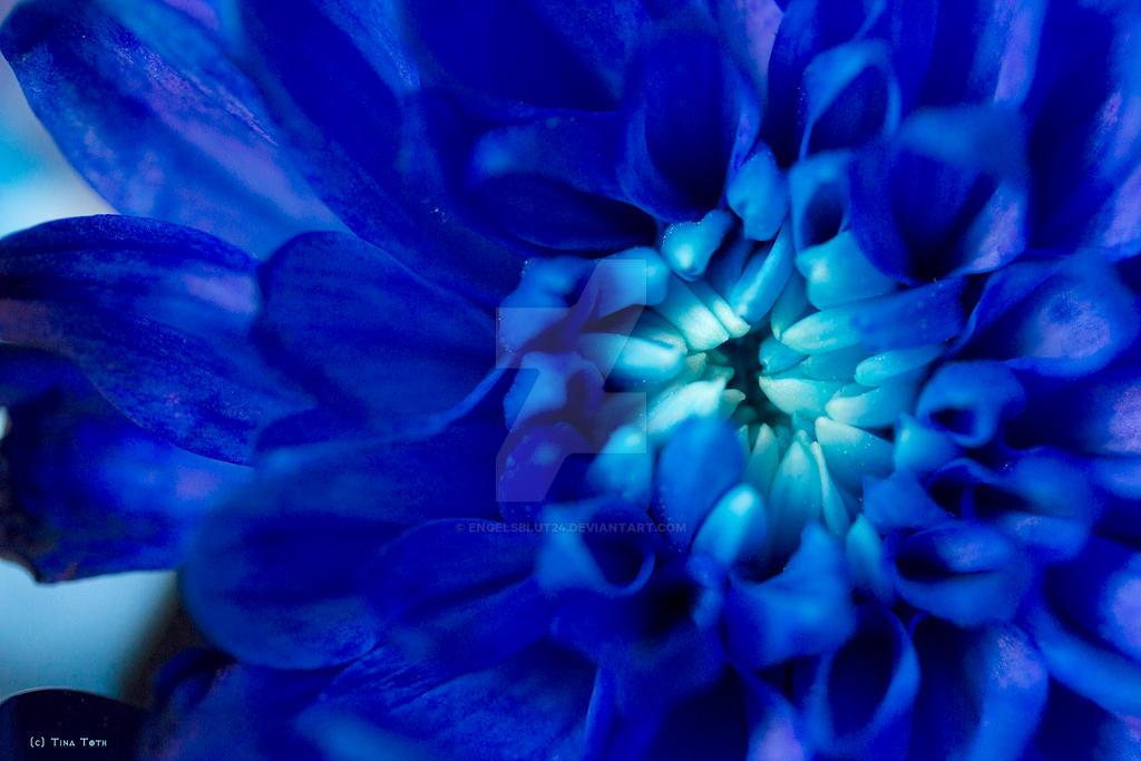 night blue by Engelsblut24