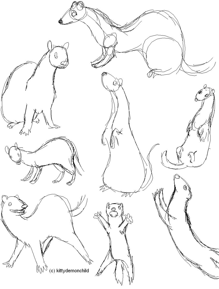 Rough Ferret Sketches by kittydemonchild on DeviantArt