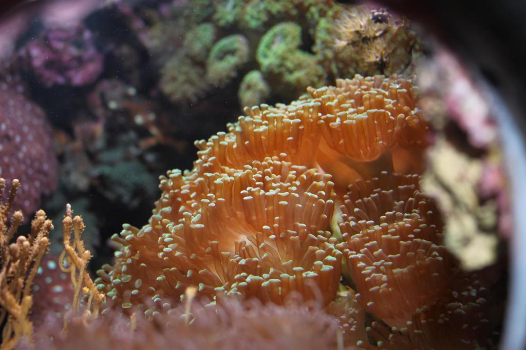 Underwater Fungus by AnneMayra