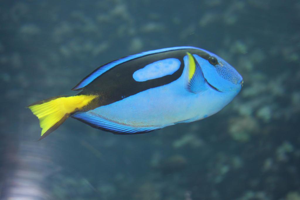 Blue Fish by AnneMayra