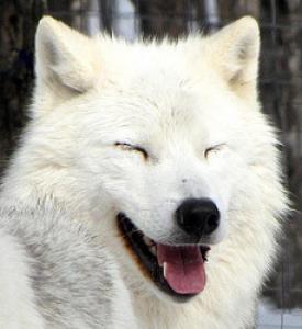 haruhi98's Profile Picture