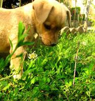 puppy by sunsetgirl18