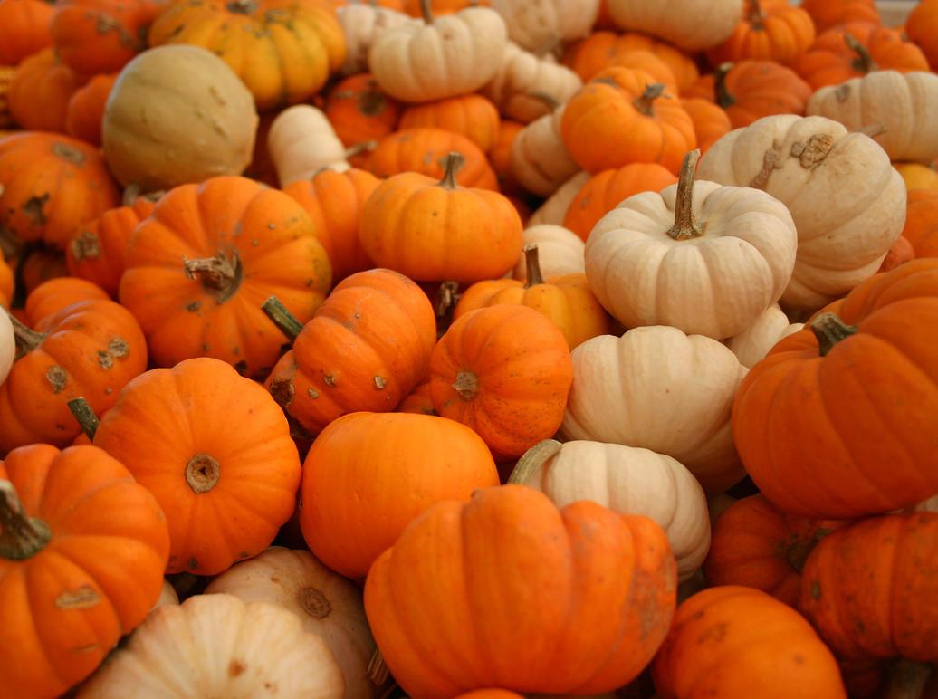 Plenty of Pumpkins by NycterisA