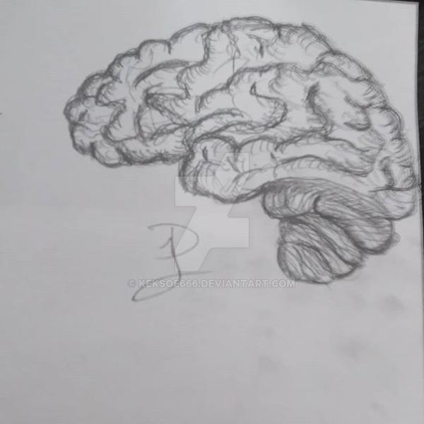 Brain-sketch (ver.1) by Keksoe666