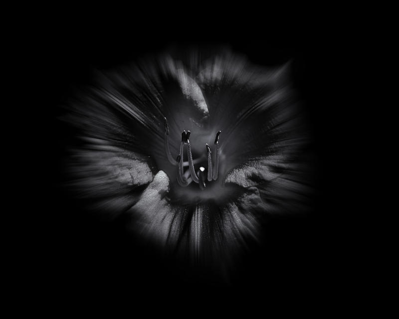 Backyard Flowers In Black And White 26 Flow by thelearningcurve-da