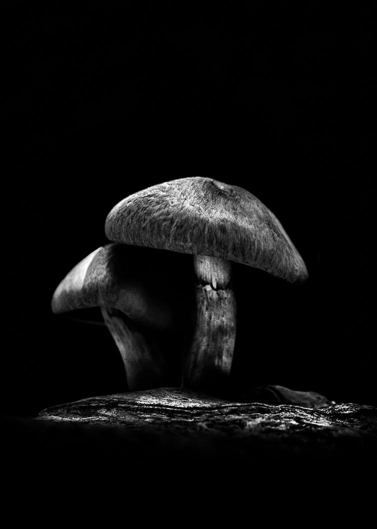 Toadstools On A Toronto Trail 6 1200 by thelearningcurve-da