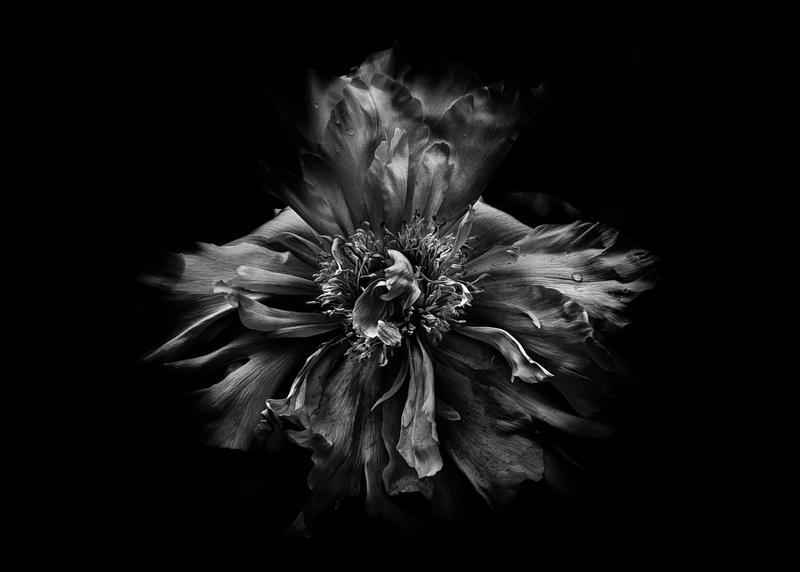 Backyard Flowers In Black And White 49 by thelearningcurve-da