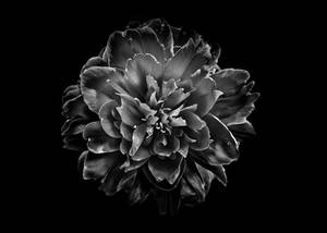 Backyard Flowers In Black And White 55