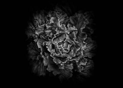 Backyard Flowers In Black And White 43