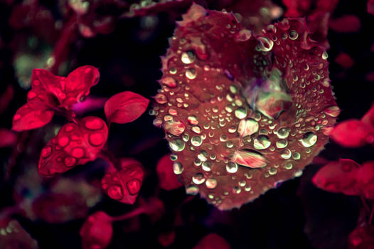 Leaf with water drops after rain Oil Paint Style