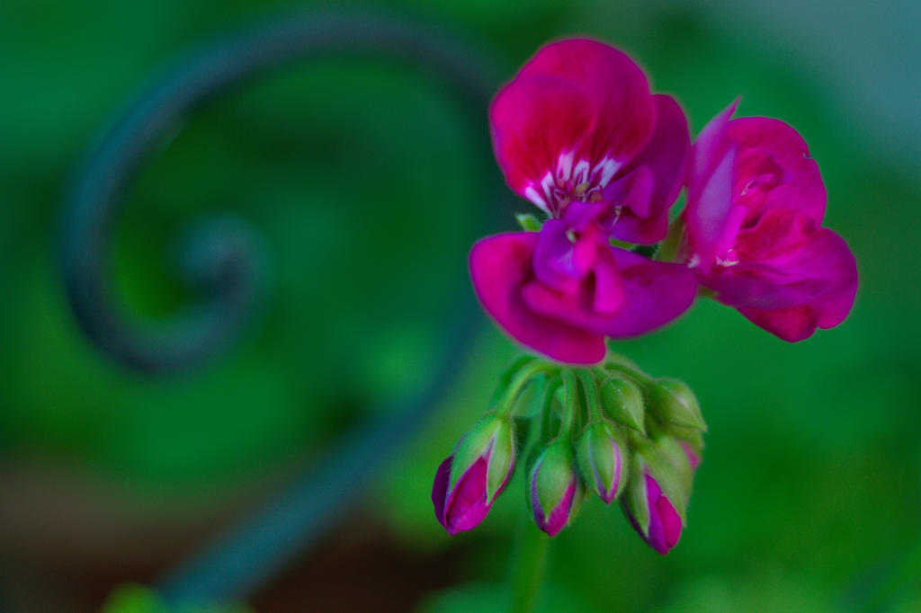 Closeup image of beautiful and tinder flower 2 by Th3R3v3nan7