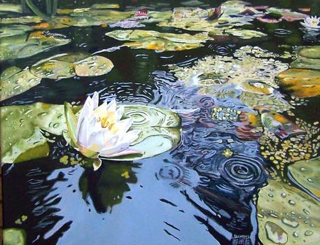 Summer Rain Lotus