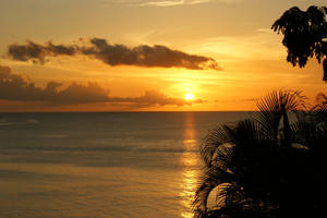 Carribean Gold by Spree5326