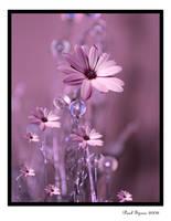 Future Daisy 2 by Spree5326