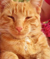 Kitten Bling by wickedlady