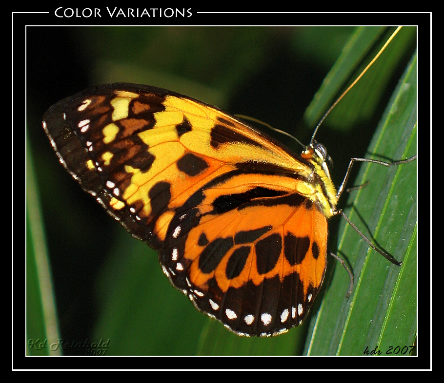 Color Variations By Xxraptus Regaliterxx On Deviantart
