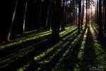 Shadow play in the wood II