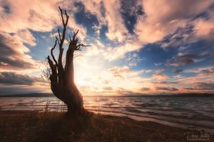 Resurrection by LinsenSchuss