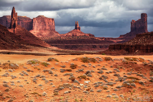 The Wild Horses in Monument Valley